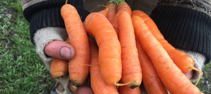 Moroccan Carrot Salad with Ginger