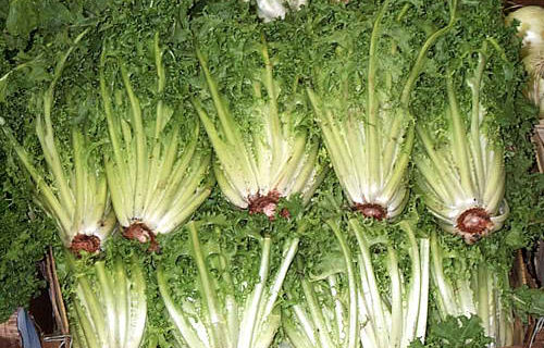 Endive with Sausage