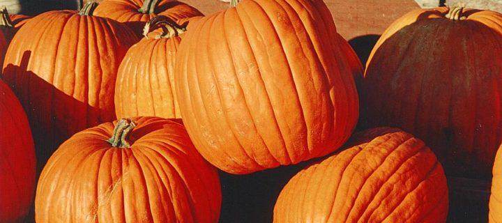 "Honey ""Pumpkin"" Pie"